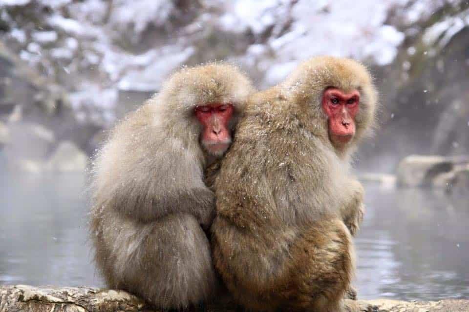 Onsen Giappone: Terme giapponesi a Yudanaka Onsen / Sky Monkey Park