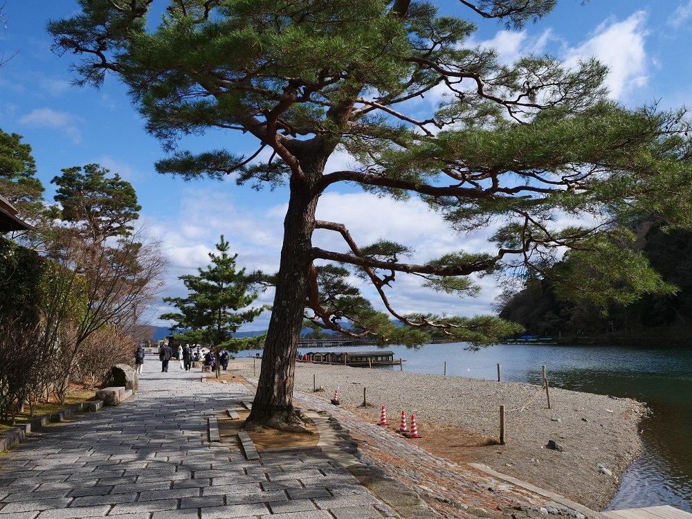Albero sul bordo del fiume ad Arashiyama